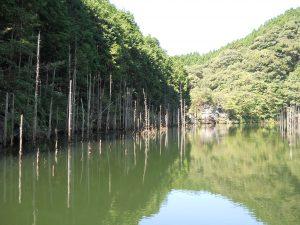 伊佐ノ浦ダムのバックウォーター
