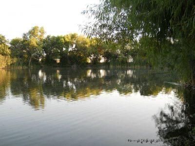 野池でバスフィッシング
