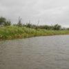 新利根川・洲の野原に翻弄される